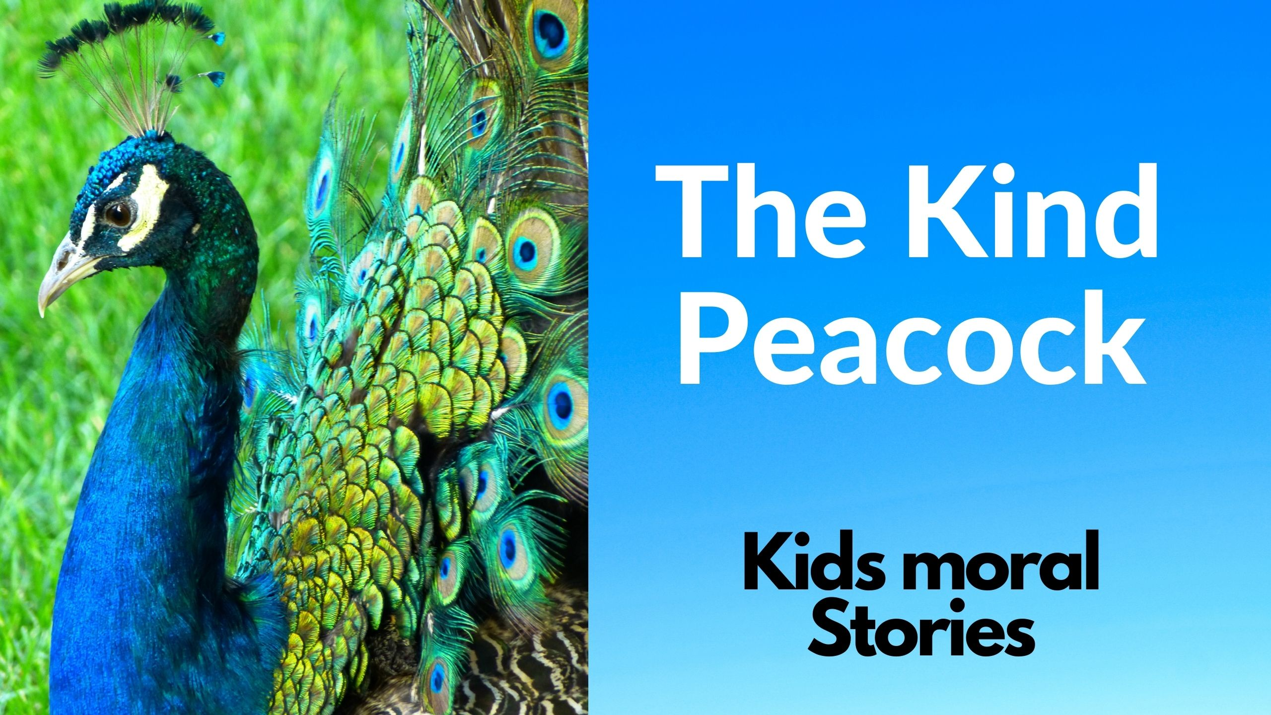 The kind peacock - kids moral stories